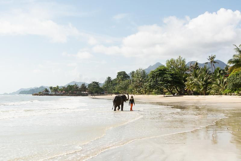 Koh Chang, Thailand - June 2019: Thai man walking an elephant on sandy Long Beach stock images
