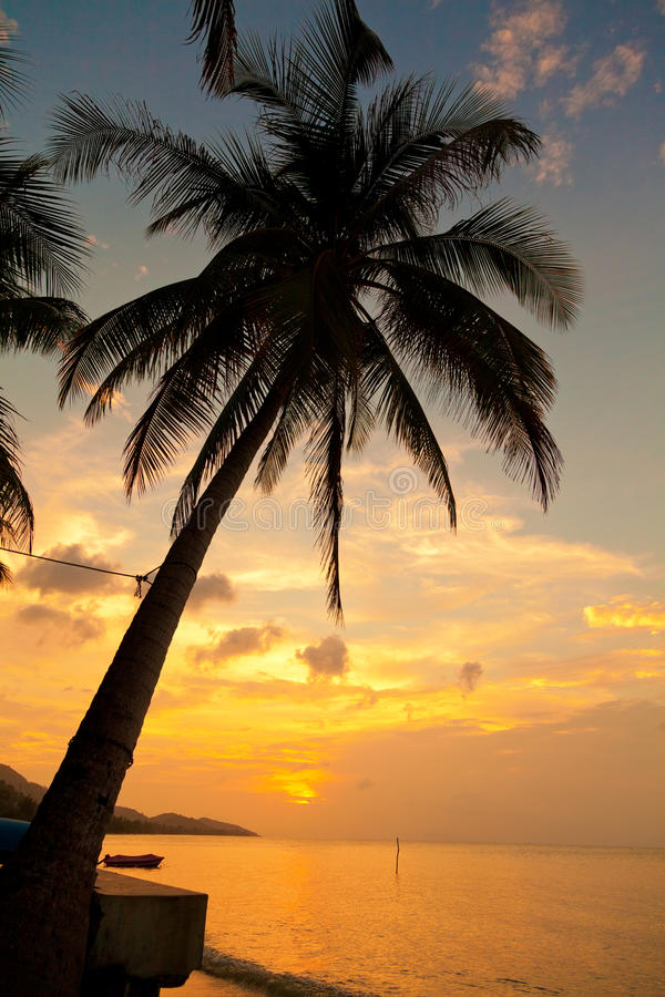 Koh Samui beach. With palm trees at sunset royalty free stock photo