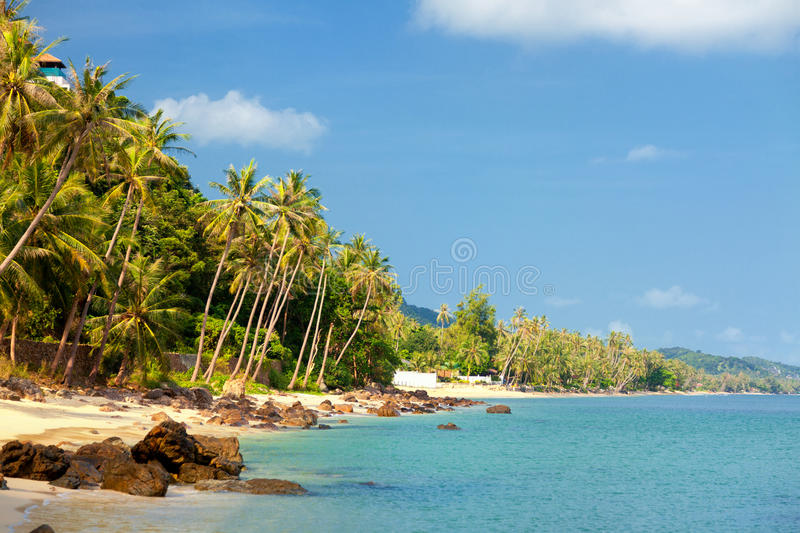 Koh Samui beach. With palm trees and white sand stock photography