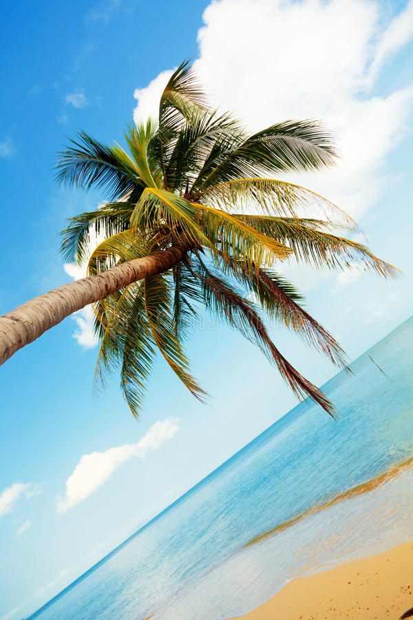Koh Samui beach. With palm trees and white sand royalty free stock images