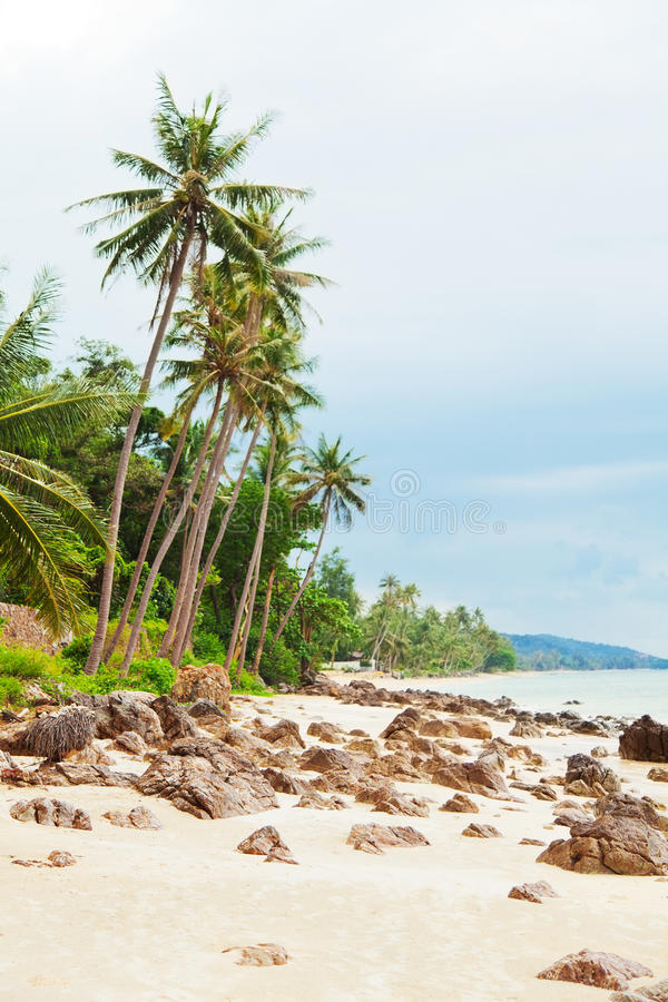 Koh Samui beach. With palm trees and white sand stock photos