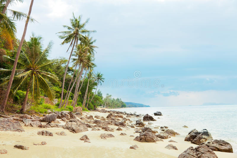 Koh Samui beach. With palm trees and white sand royalty free stock image