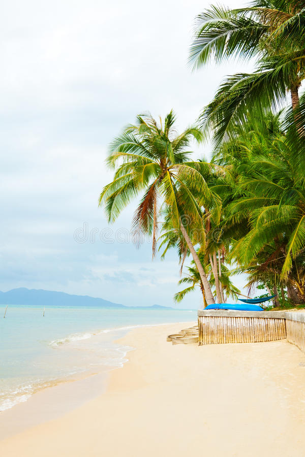 Koh Samui beach. With palm trees and white sand royalty free stock photography