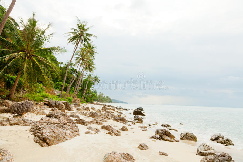 Koh Samui beach. With palm trees and white sand stock photo