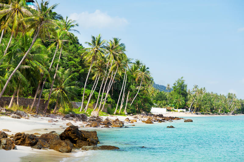 Koh Samui beach. With palm trees and white sand royalty free stock photo