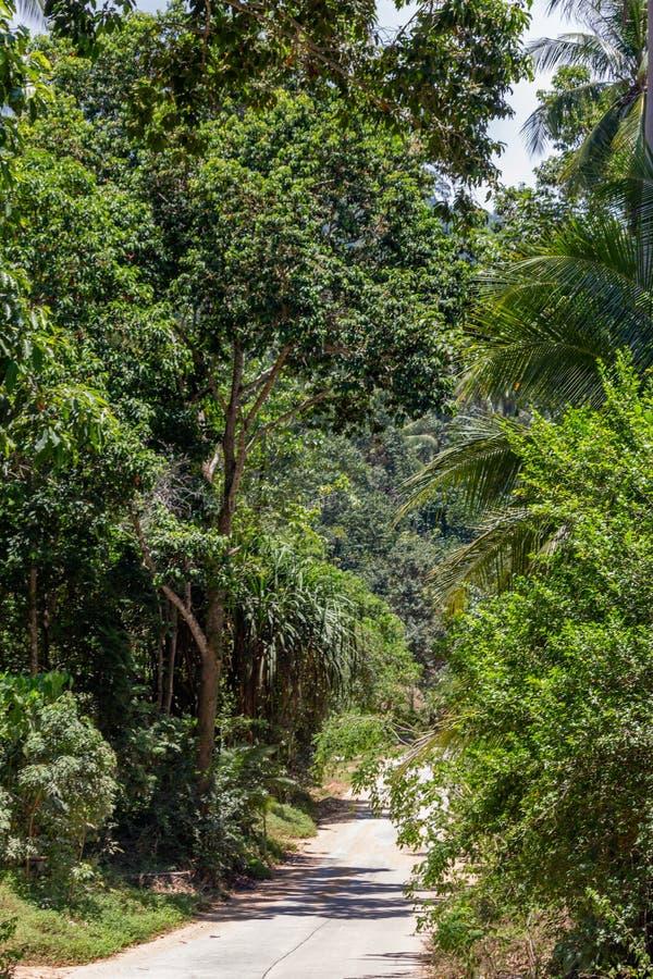 Koh Samui dżungla Tajlandia obraz royalty free
