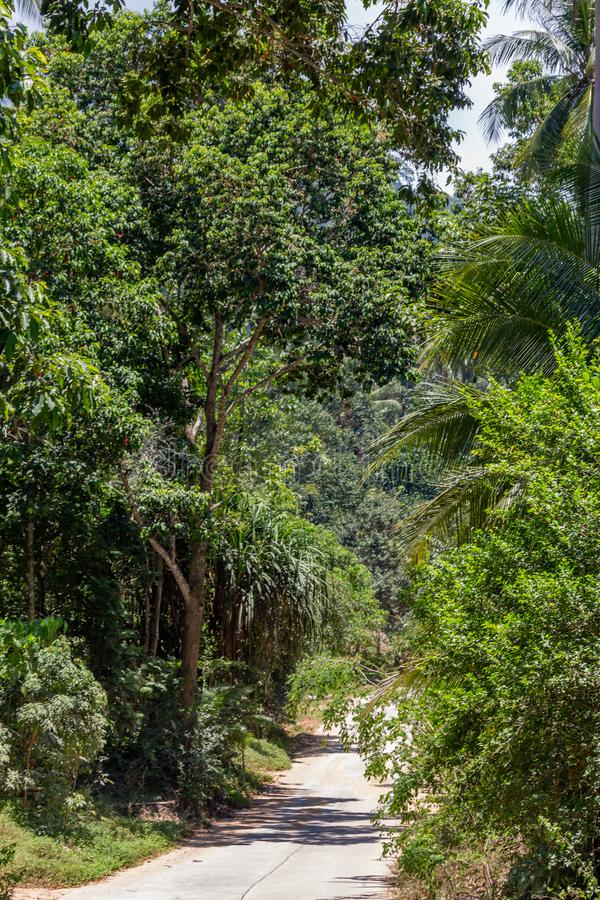 Koh Samui djungel Thailand royaltyfri bild