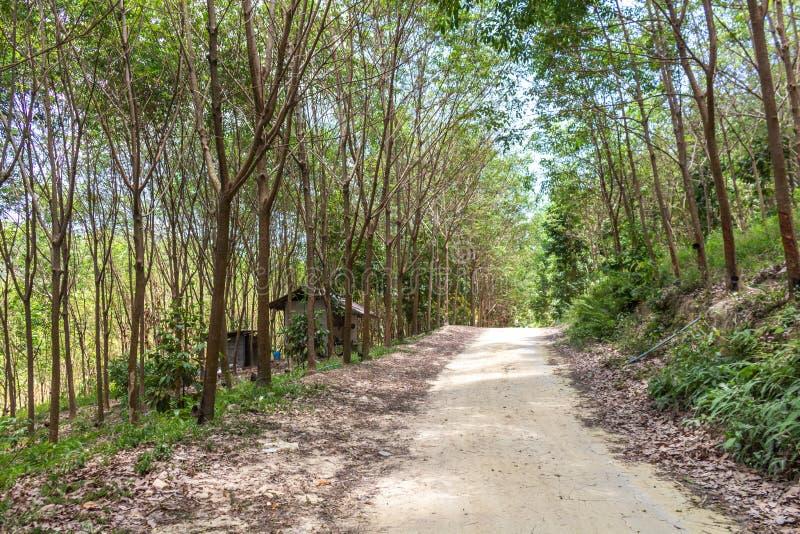 Koh Samui djungel Thailand arkivfoto