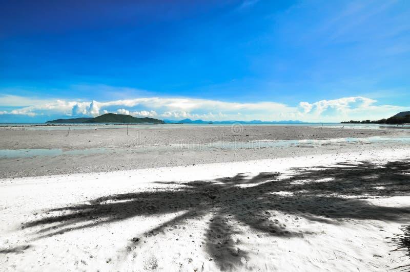 Koh Samui met kokospalm op panoramisch tropisch strand royalty-vrije stock foto