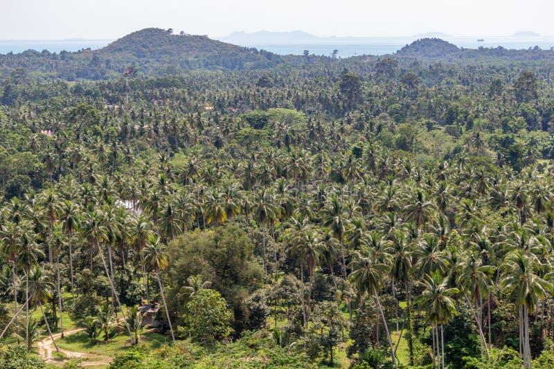 Koh Samui palmträddjungel arkivfoto