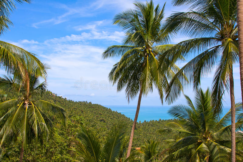 Koh Samui, Thailand. Beautiful tropical island Koh Samui in Thailand stock image