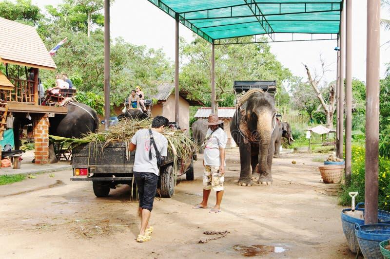 KOH SAMUI, THAILAND - OKTOBER 23, 2013: Lantgårdelefanter för trekking royaltyfri fotografi
