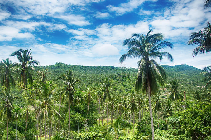 Koh Samui tropical forest royalty free stock photography