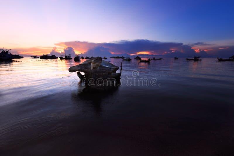 Koh Tao-Schildkröte stockbild