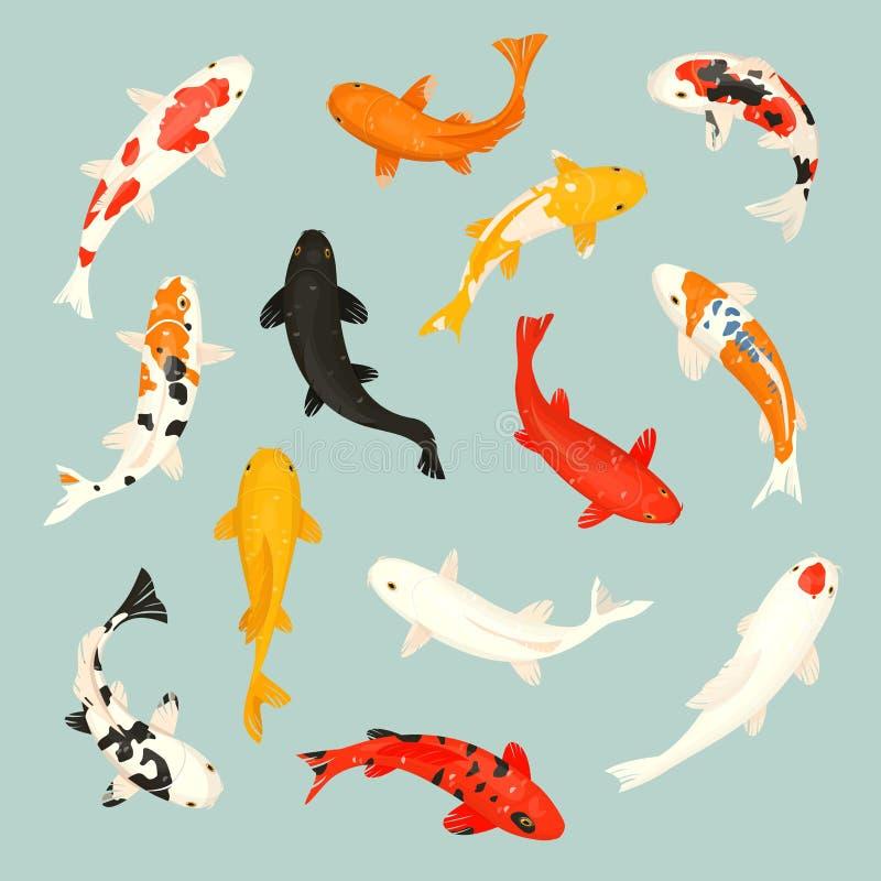 色亚洲日本18图_koi鱼导航例证日本鲤鱼和五颜六色的东方koi在亚洲套中国金鱼和传统.