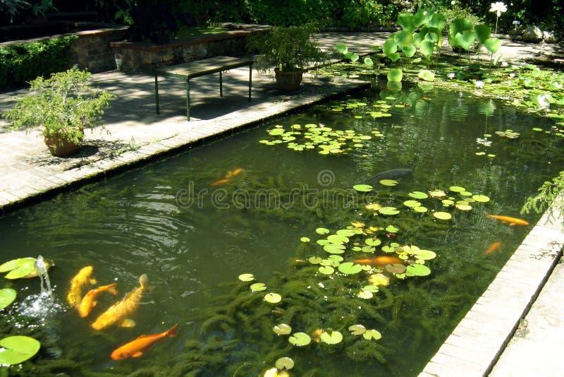 koi 02 κήπων στοκ εικόνες
