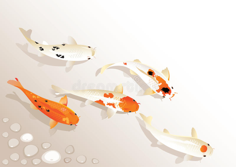 Koi Carp royalty illustrazione gratis