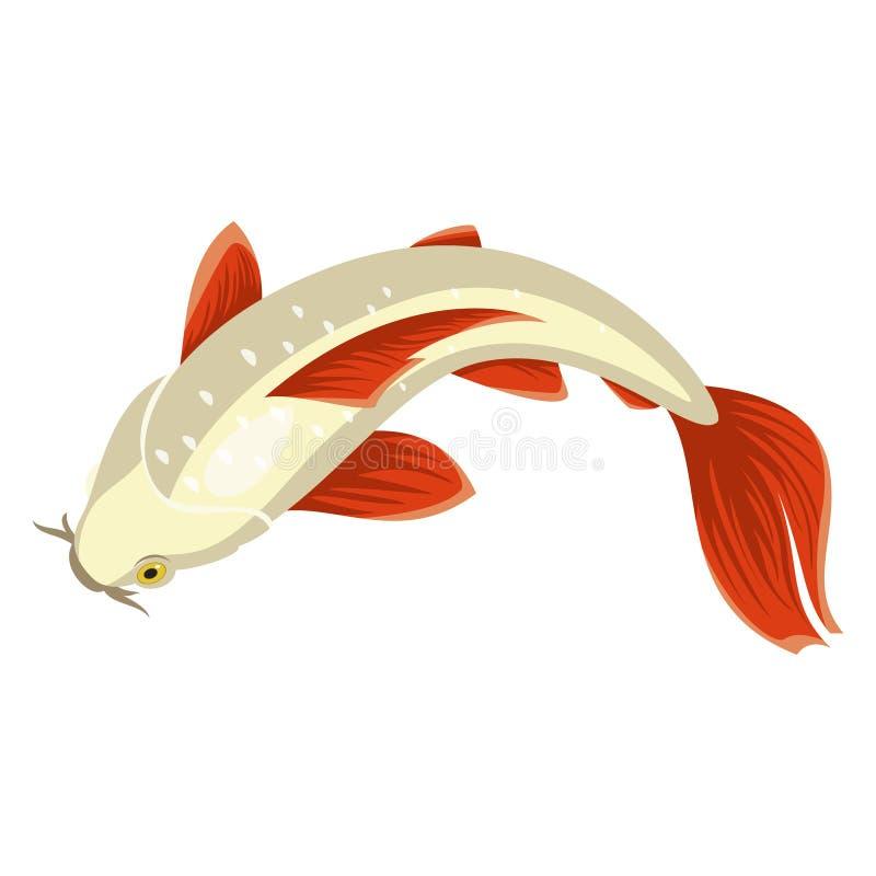 Koi carp, beautiful bright Japan pond fish vector illustration