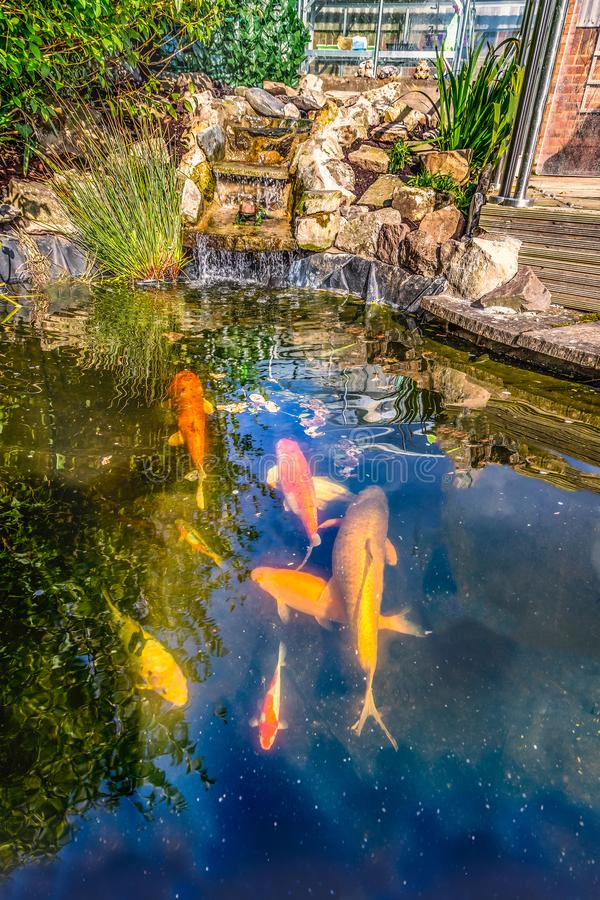 Koi carp fish pond with stone, rockery waterfall in a garden or back yard as a water feature for pet fish royalty free stock photos