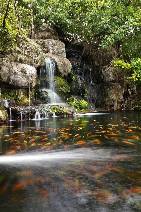 Koi Fische im Teich am Garten mit einem Wasserfall stockfoto