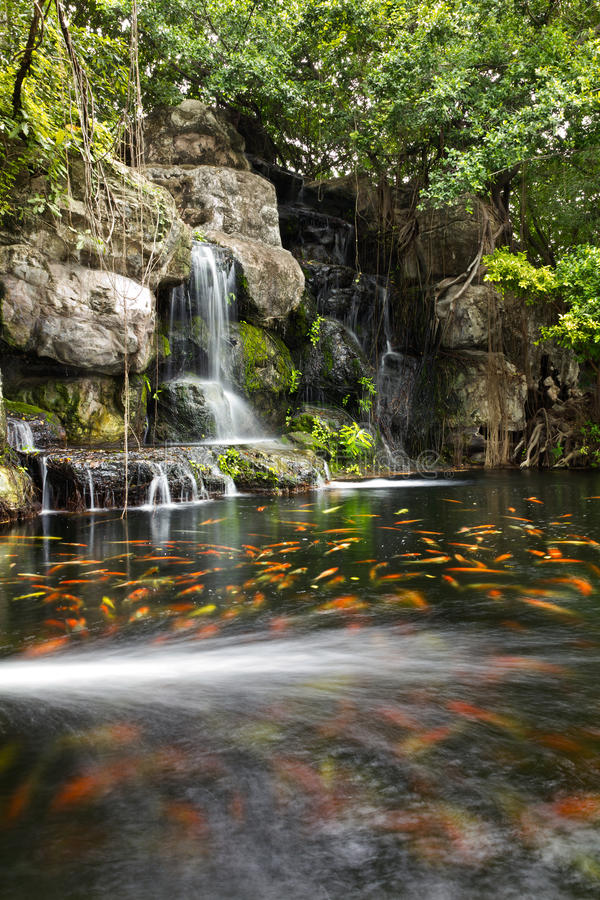Free Koi Fish In Pond At The Garden With A Waterfall Stock Photo - 25541050