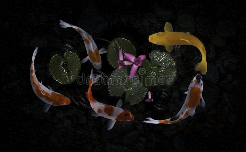 Koi fish pond with lotus flowers. Beautiful Koi Fish Swimming Pond Lotus royalty free stock photography
