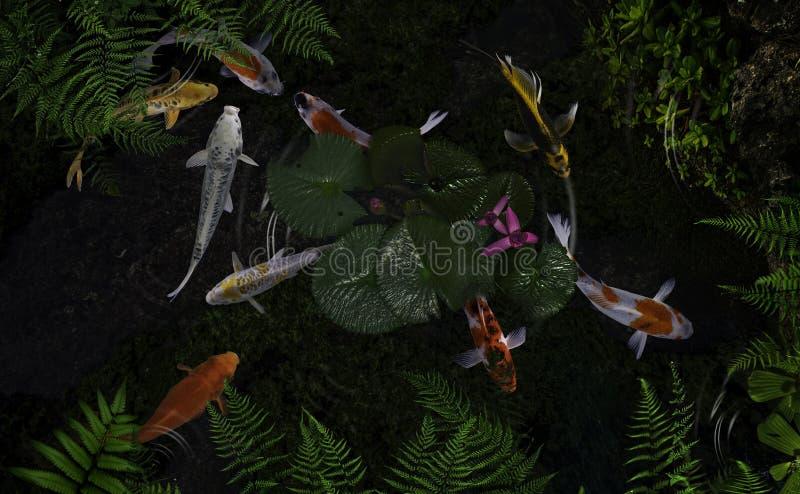 Koi fish pond with lotus flowers. Beautiful Koi Fish Swimming Pond Lotus stock images
