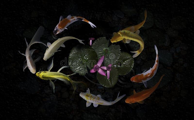 Koi fish pond with lotus flowers. Beautiful Koi Fish Swimming Pond Lotus stock image