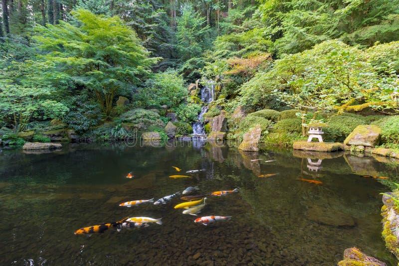 Koi Fish in Waterfall Pond at Japanese Garden royalty free stock photo