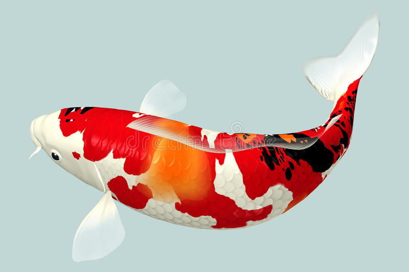 Koi fish stock photo image of environment garden for Koi fish environment
