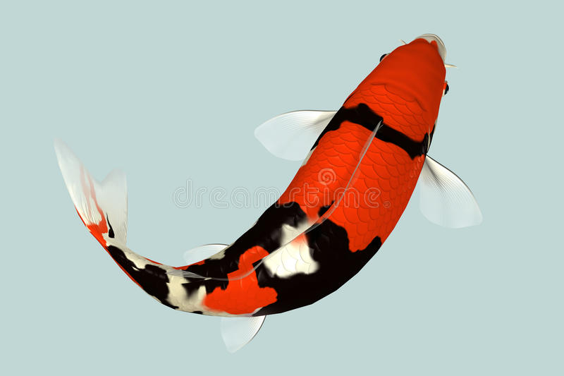 Download Koi Fish stock image. Image of color, swimming, ripples - 37920887