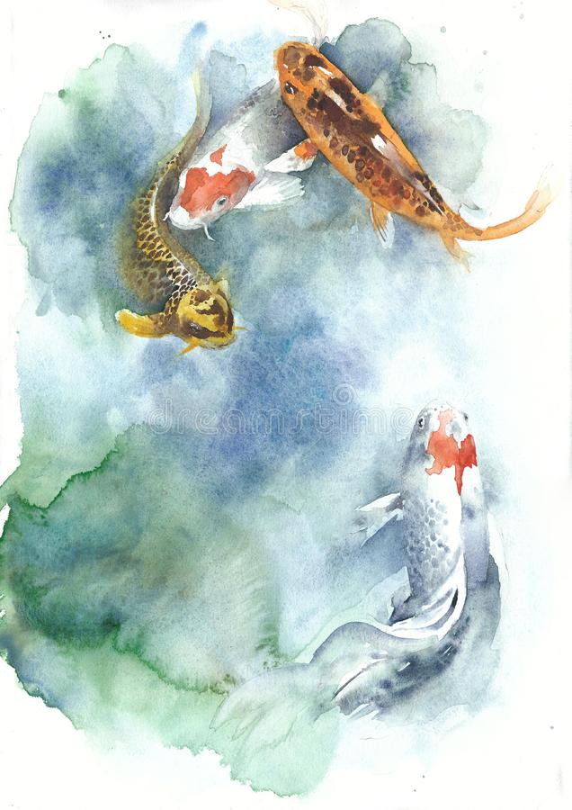 Koi fish watercolor painting isolated greeting card on white background vector illustration
