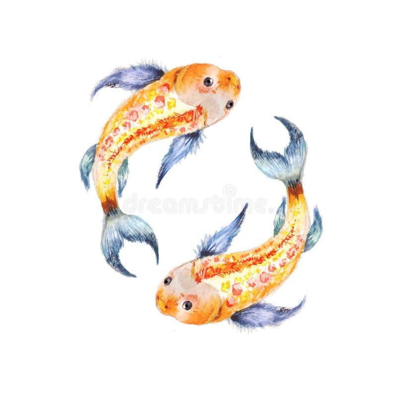 Koi fish. Yin Yang symbol. Watercolor illusration isolated. On white. Two fish, theme love vector illustration