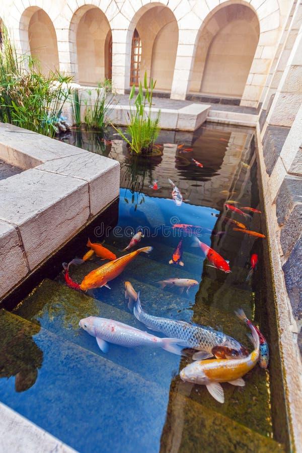 Koi Pond with Japan Colorful Carps Fishes. Koi Pond with Japan Colorful Carps stock photography