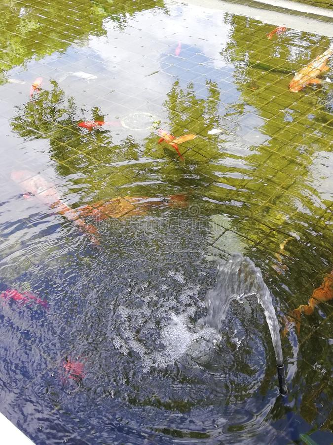 Koi Pond Ripples fotografia stock
