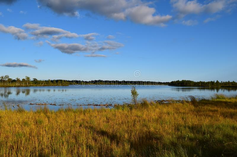 Koigi沼泽在萨列马岛,爱沙尼亚 库存照片