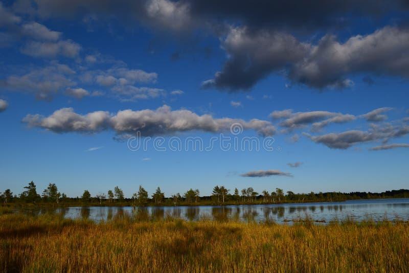 Koigi沼泽在萨列马岛,爱沙尼亚 图库摄影