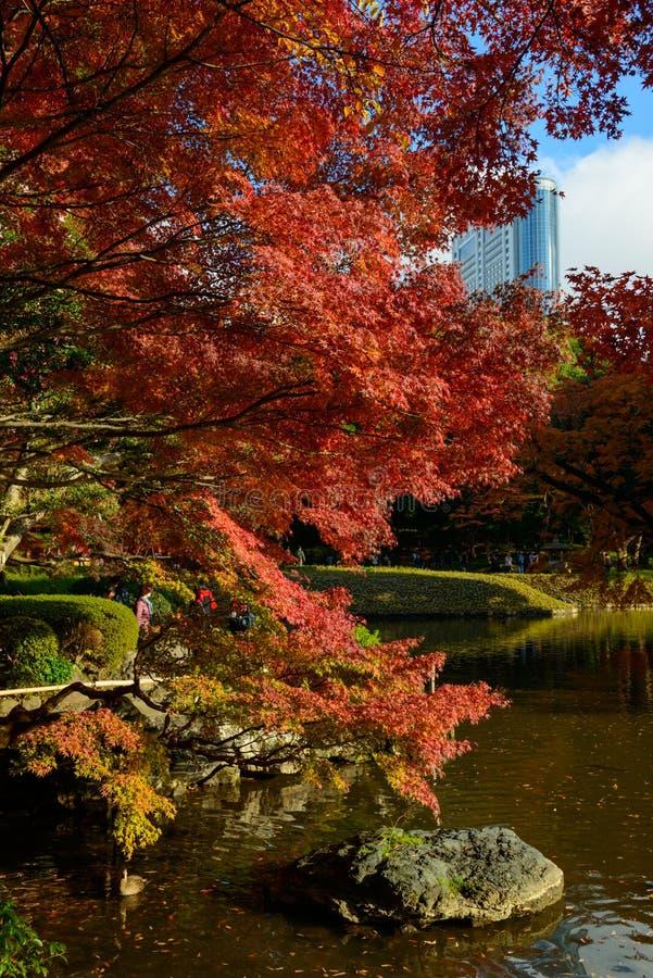 Download Koishikawa Korakuen Garden In Autumn In Tokyo Stock Image - Image of korakuen, metropolitan: 39509529
