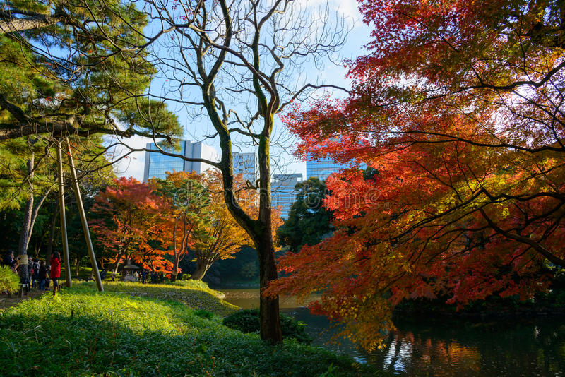 Download Koishikawa Korakuen Garden In Autumn In Tokyo Editorial Stock Photo - Image of city, korakuen: 39509538