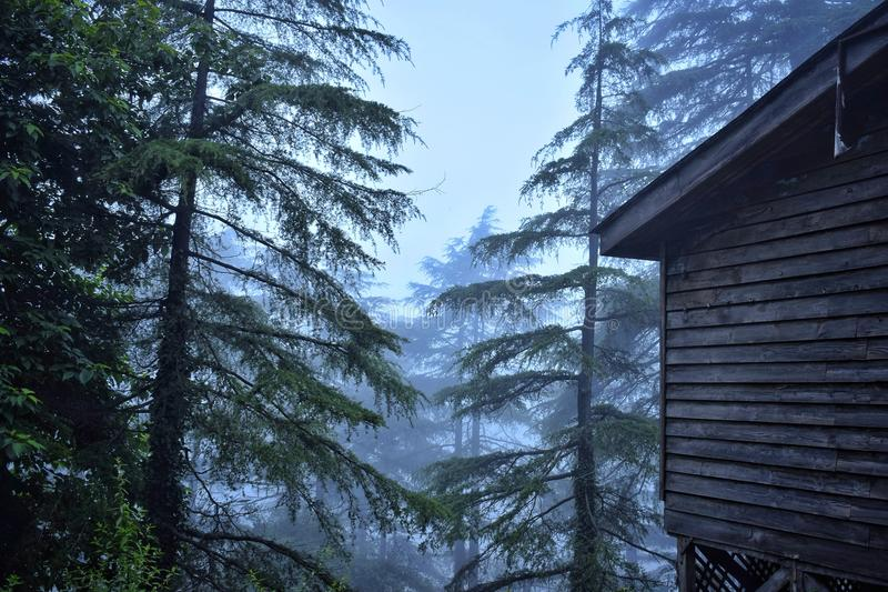 Koja i en dimmig skog arkivbild