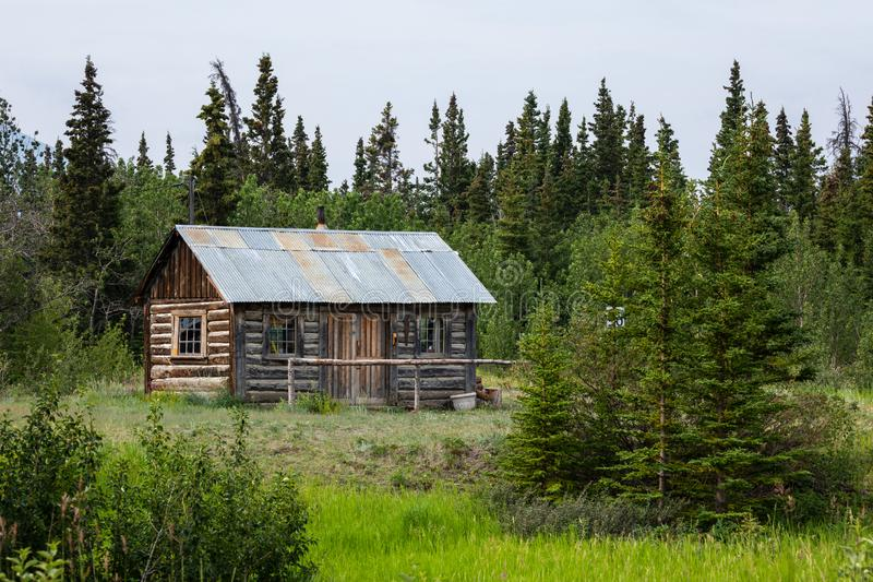 Koja i vildmarken av Kanada royaltyfri bild
