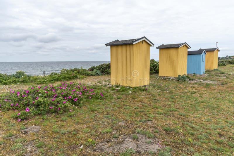 Kojor i Viken i Sverige royaltyfri fotografi