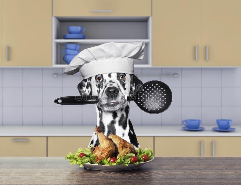 Kok Dalmatische hond die een lepel houden stock foto