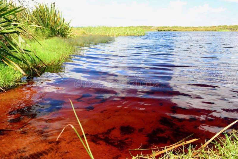 koka-kola Rotopokaka jezioro w Nowa Zelandia It's woda koka-kola colour gdy ty patrzejesz w je zdjęcie stock