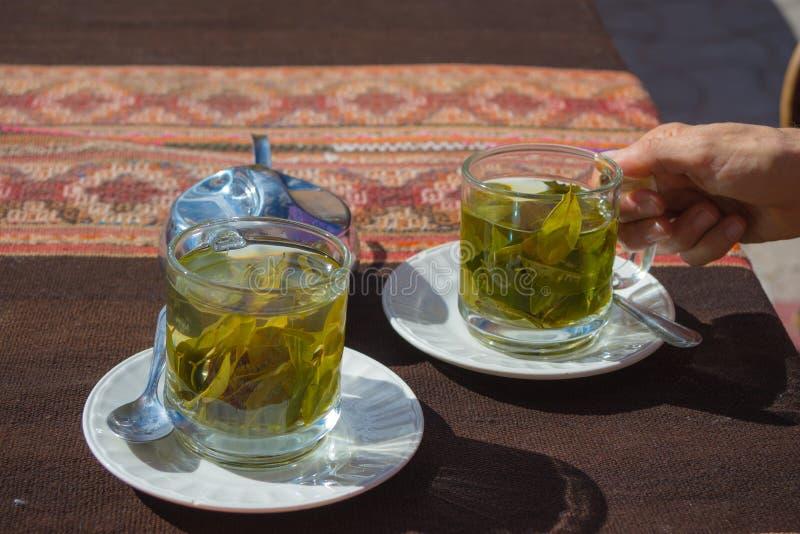 Koka verlässt Tee bekannt als lizenzfreie stockbilder