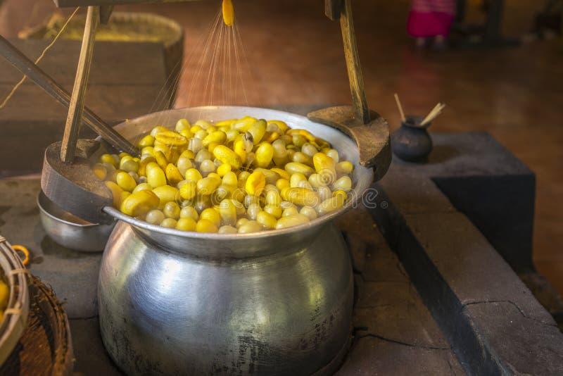 Kokande gula silkesmaskkokonger arkivfoto