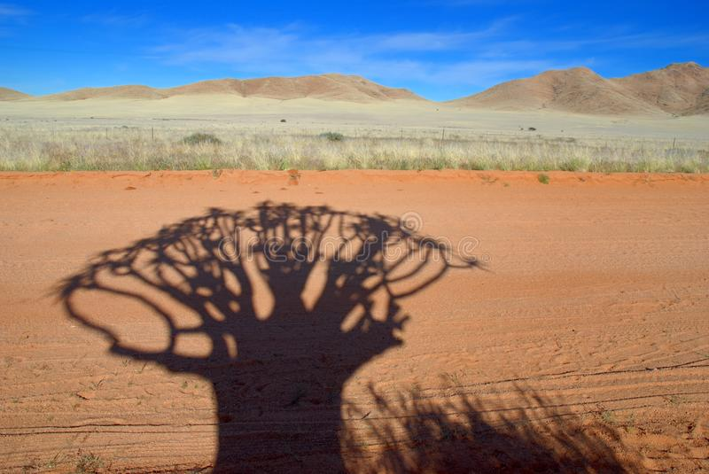 Kokerboom Schatten stockbilder