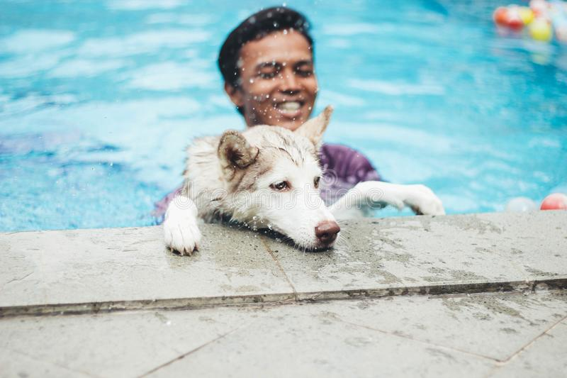 Koko der Schlittenhund lizenzfreie stockfotos