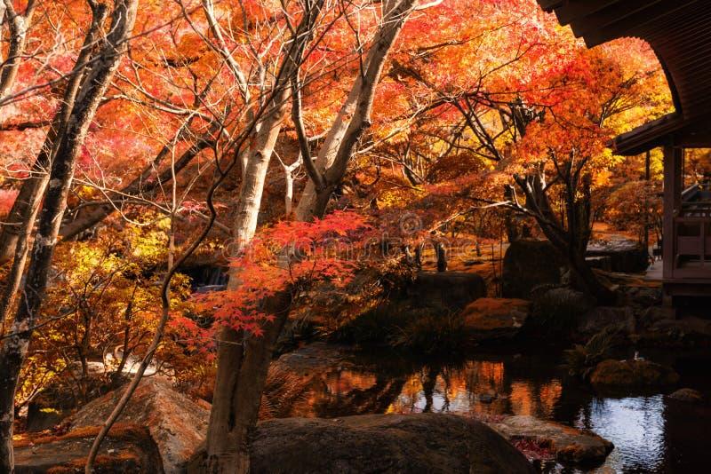 Koko en庭院在秋天,姬路 免版税库存照片
