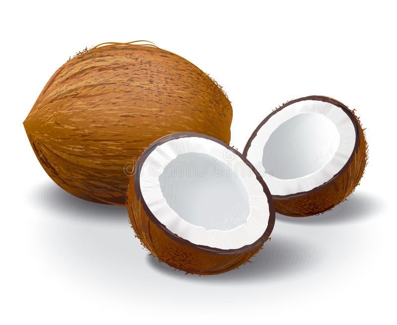 kokosnöt royaltyfri illustrationer
